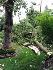 tree down view 2
