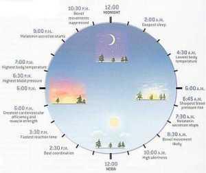 circadian rythms